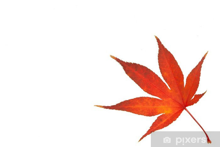 Sticker Pixerstick Spitzahornblatt im Herbst - Agriculture