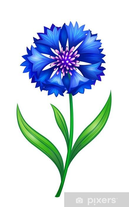 7604bd31365498 Fototapeta Niebieski chaber • Pixers® - Żyjemy by zmieniać