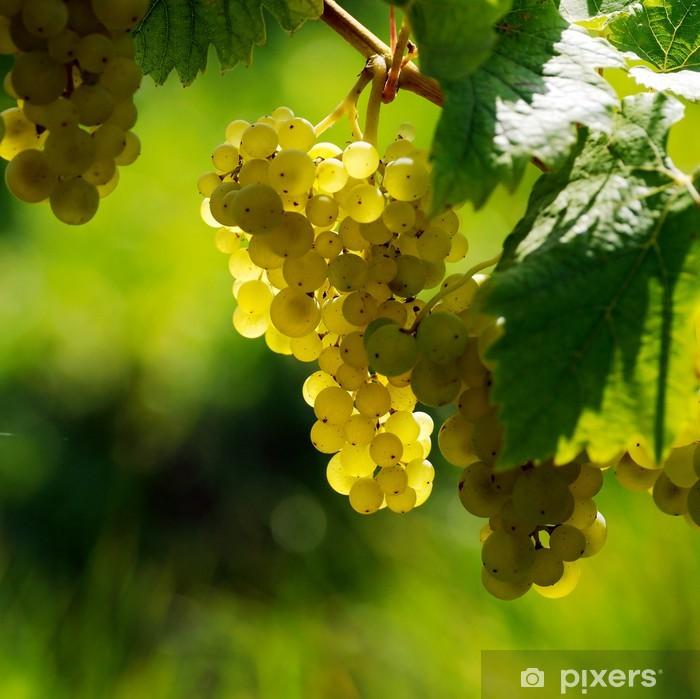 Papier peint vinyle Les raisins blancs - Fruits