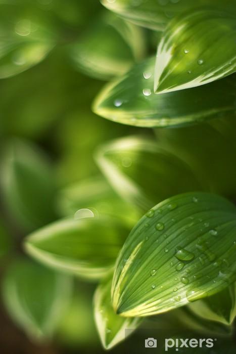 Fototapeta winylowa Pieczęć Salomona - Rośliny