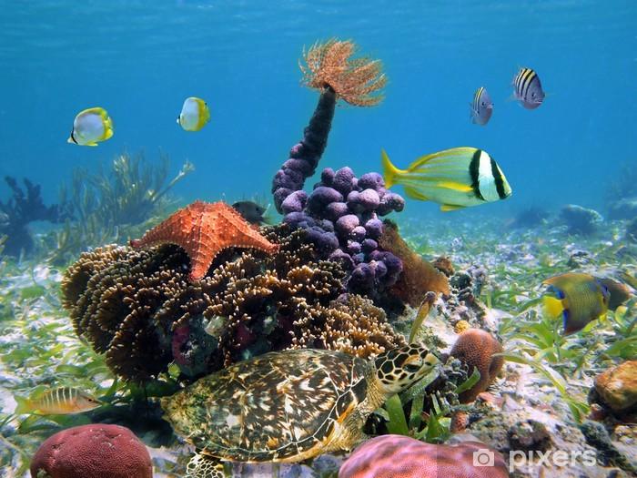 Papier peint vinyle Tortue verte avec la vie marine colorée - Thèmes