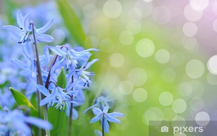 Fototapeta winylowa Niebieskie dzwonki wiosna rosnące w lesie - Pory roku