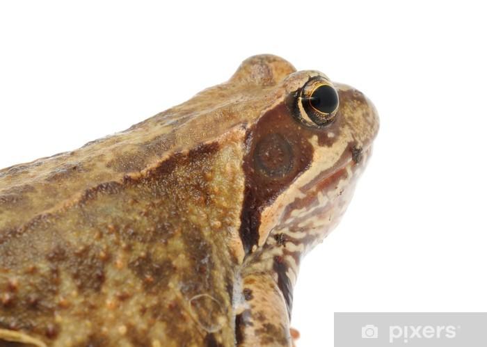 Sticker Pixerstick Grande grenouille brune sur fond blanc - Autres Autres
