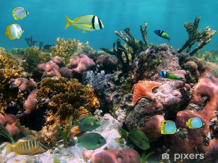 Fototapeta samoprzylepna Tropikalne ryby w korale - Tematy