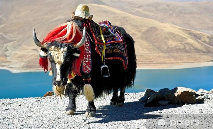 Tibetan-yak Vinyyli valokuvatapetti - Aasia