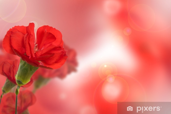 Papier peint vinyle Belle fleur d'oeillet rouge sur fond flou naturel - Plantes