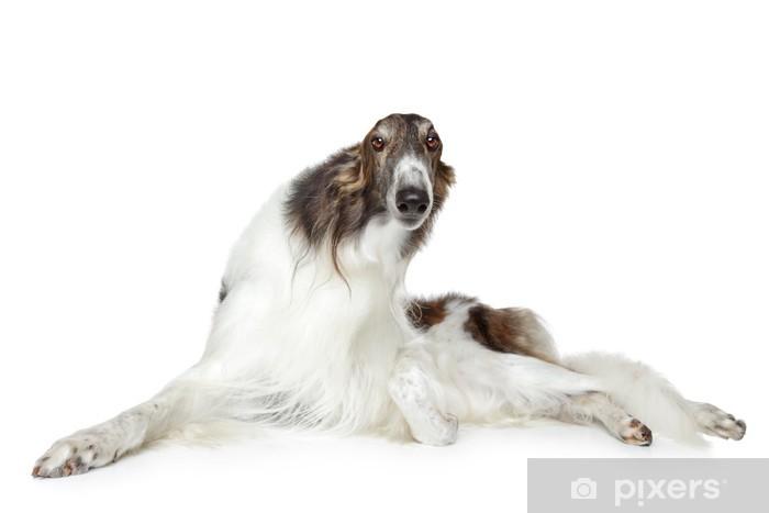 Russian borzoi, greyhound dog Pixerstick Sticker - Mammals