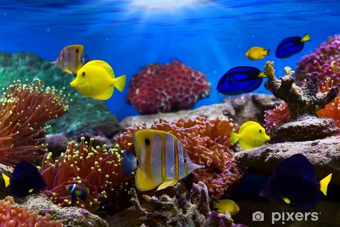 Vinyl Fotobehang Coral Reef en de tropische vissen in zonlicht - Thema's
