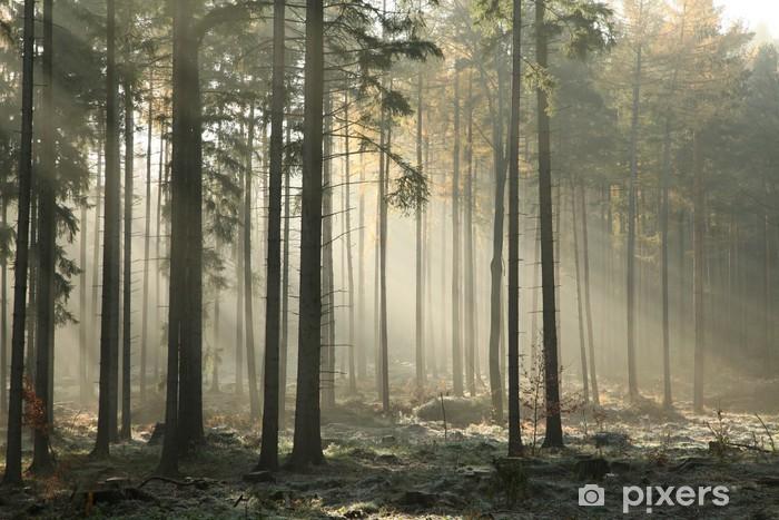 Pixerstick Sticker Pittoresk herfst bos op een mistige ochtend van November - iStaging