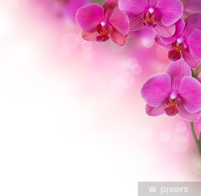 Orchid Flower Border Design Wall Mural Pixers 174 We Live