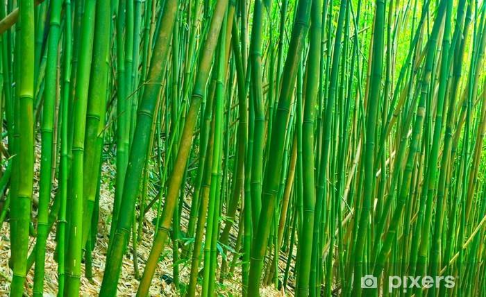 Papier peint vinyle Vert Zen Bamboo - Agriculture