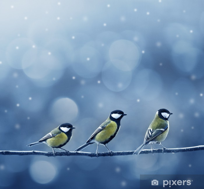 three titmouse birds in winter Vinyl Wall Mural - Themes
