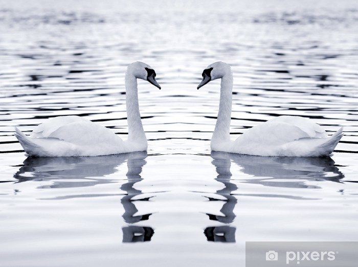 white swans Pixerstick Sticker - Swans