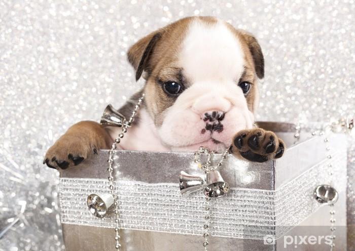 Regali Di Natale Inglese.Carta Da Parati In Vinile Bulldog Inglese Cucciolo E Regali Di Natale