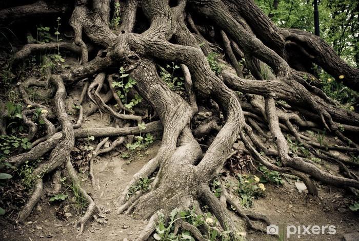Sticker Pixerstick Twisted vieilles racines des arbres - Plantes