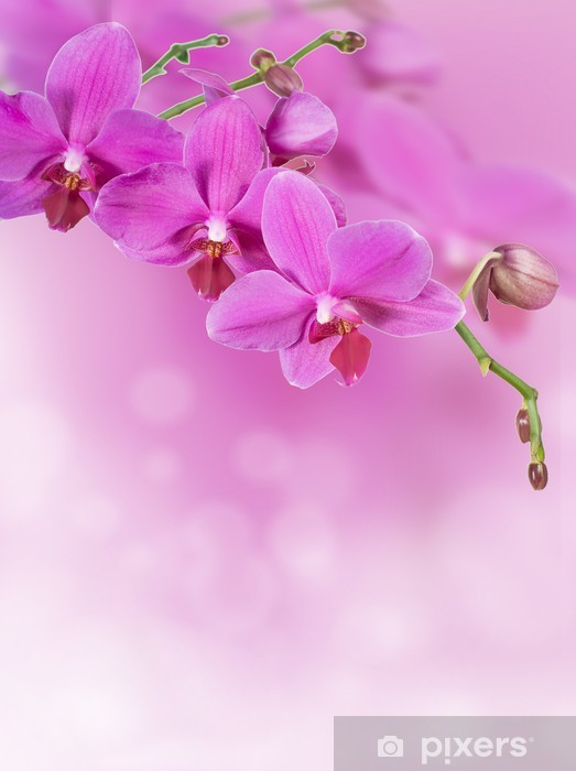 Pink Orchid Background Wall Mural Pixers 174 We Live To
