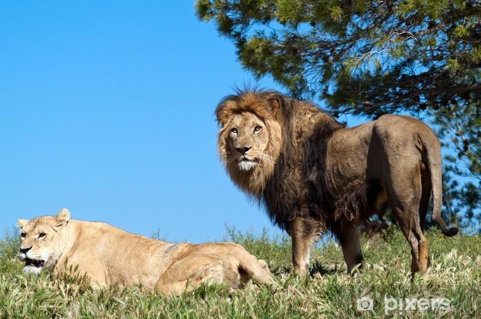 ac2f2e895ccb5 Papier peint Le Roi Lion • Pixers® - Nous vivons pour changer