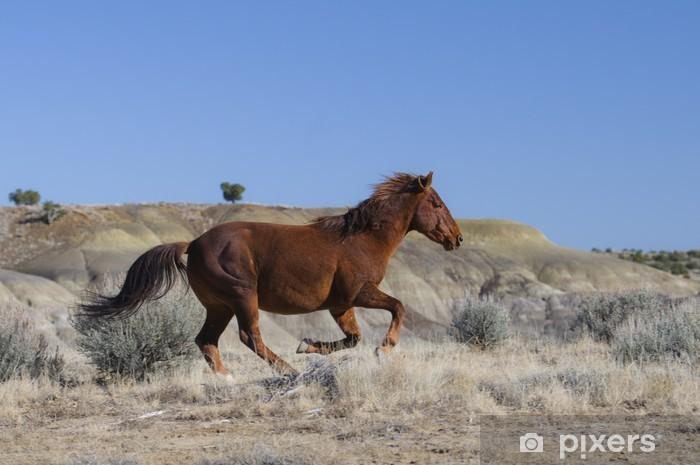 Fototapeta winylowa Dziki koń z systemem - Ssaki