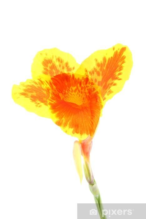 Papier Peint Simple D Orange Canna Lily Et Fleur Jaune Pixers