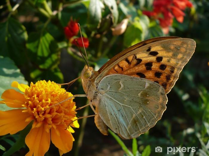 Perhonen juo kukan nektaria Vinyyli valokuvatapetti - Muu Muu
