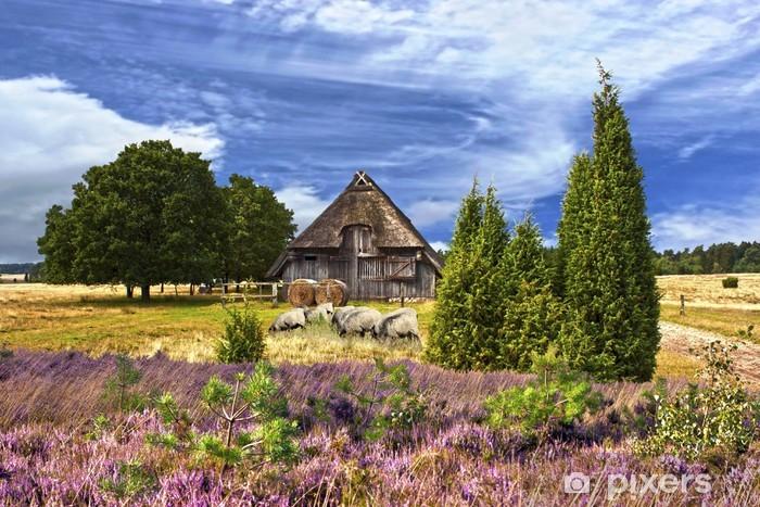 Fototapeta winylowa Moorland w Lüneburg Heath - Niemcy