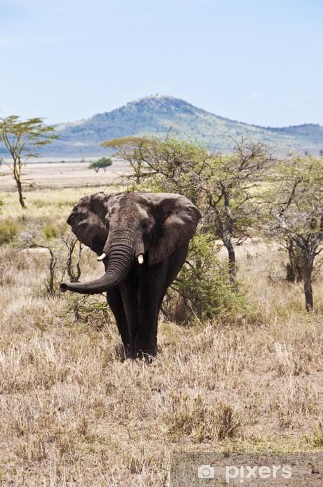 Fototapeta winylowa Elephant in der Serengeti - Ssaki