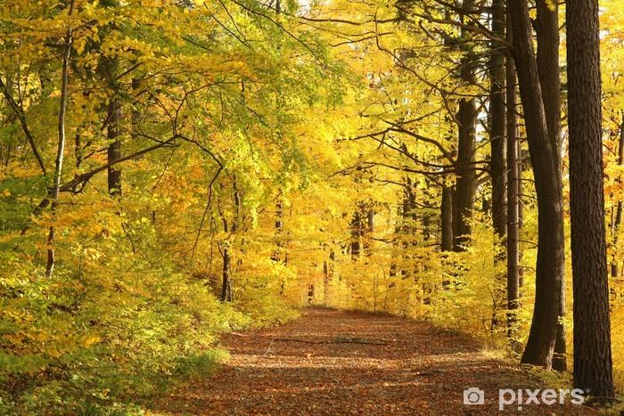 Naklejka Pixerstick Szlak leśny otoczony złotymi kolorami jesiennych liści - Tematy