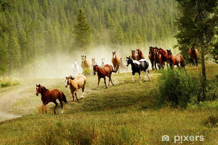 Fototapeta zmywalna Działa konie - Konie