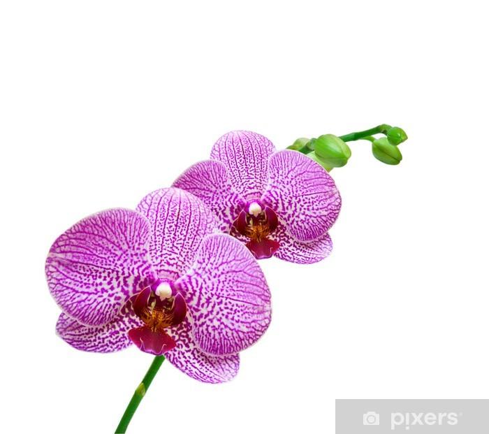 Vinylová fototapeta Orchideje izolovaných na bílém pozadí - Vinylová fototapeta
