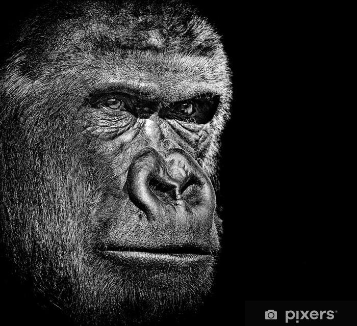 Vinylová fototapeta Gorila portrét - Vinylová fototapeta