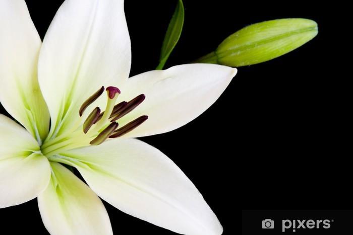 Schwarze lilie