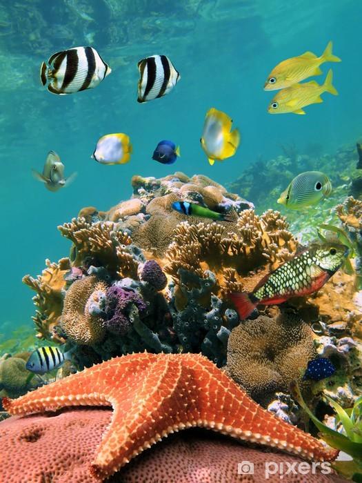 Fotomural Estándar Mar-estrella y pescado - Submarinos