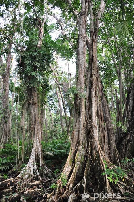 Vinyl-Fototapete Küstenregenwald in Costa Rica - Natur und Wildnis