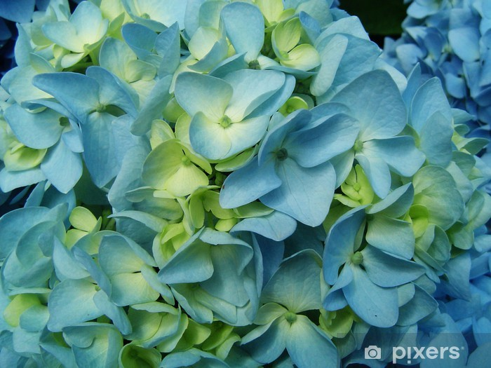 Blue Hydrangea flower Pixerstick Sticker - Flowers