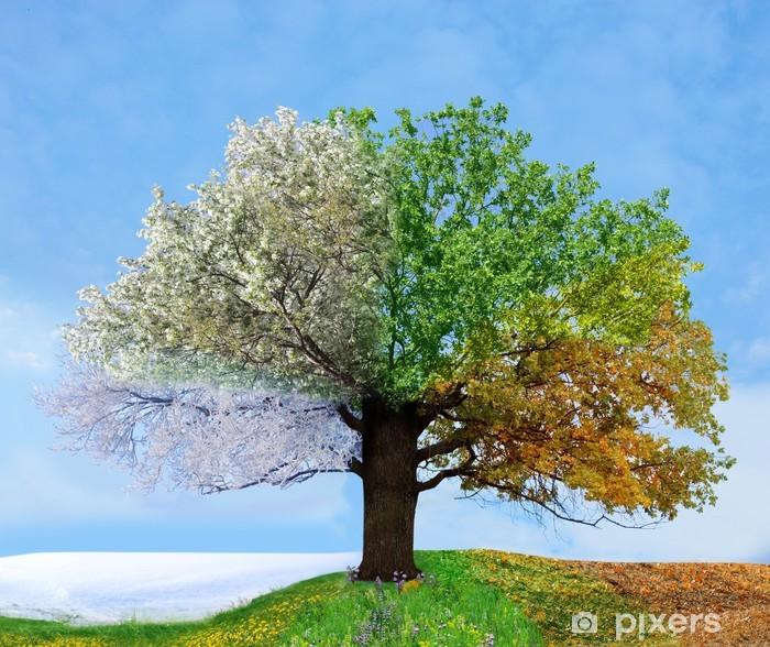 Fototapeta winylowa Cztery pory roku drzewo -
