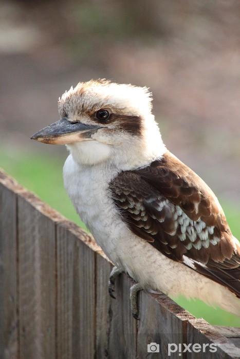 Naklejka Pixerstick Australijski Kookaburra (Dacelo novaeguineae) - Ptaki