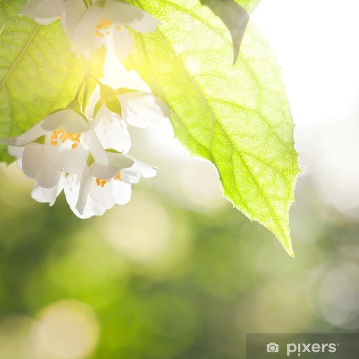 Papier Peint Fleur Jasmin Pixers Nous Vivons Pour Changer