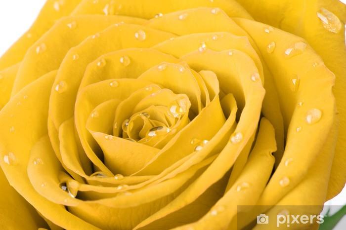 Papier peint vinyle Rose jaune avec des gouttes d'eau - Thèmes