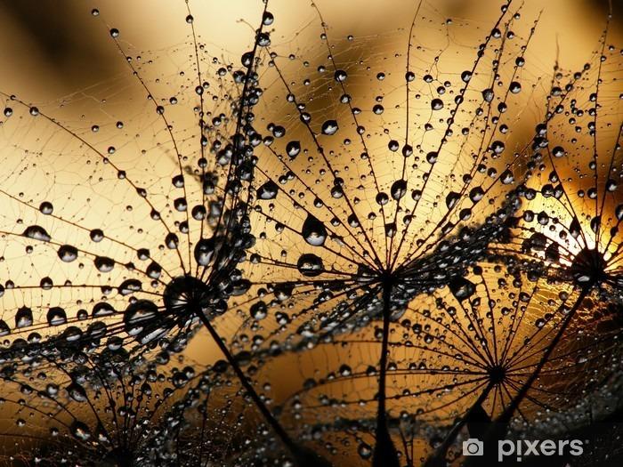 Vinilo Pixerstick Dandelion seed wet -