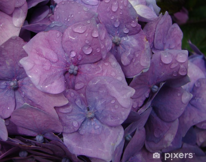 Papier peint vinyle Jardin pluie - Fleurs