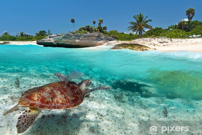 Caribbean Sea scenery with green turtle in Mexico Pixerstick Sticker - Themes