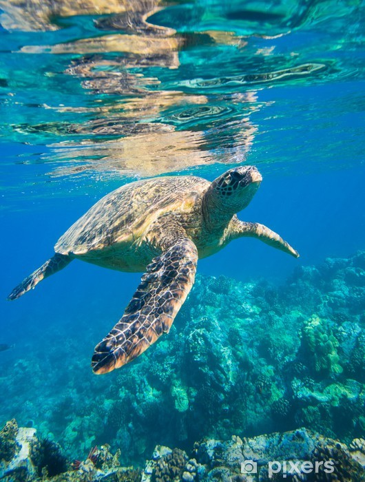 Papier peint vinyle Tortue de mer verte natation en mer océan - Animaux