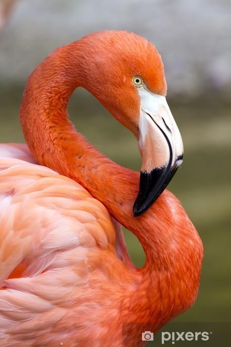 Papier peint vinyle Flamingo en S - Oiseaux