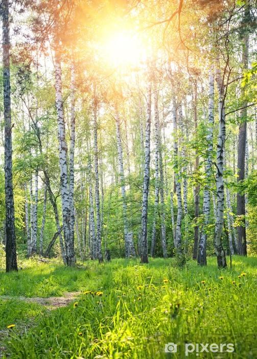 Papier peint vinyle Printemps ensoleillé forêt - Thèmes