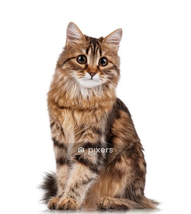 Muursticker Cute Cat - Zoogdieren
