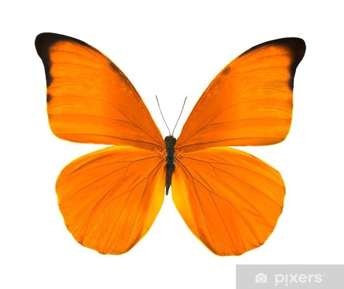 Papier Peint Tropicale Orange Vif Papillon Pixers Nous Vivons