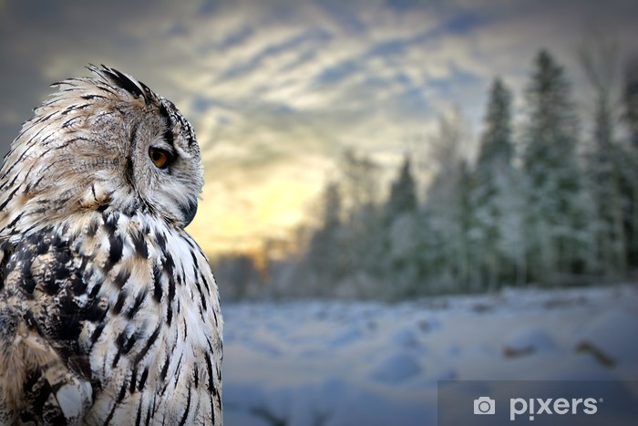 owl on winter forest background Pixerstick Sticker - Themes