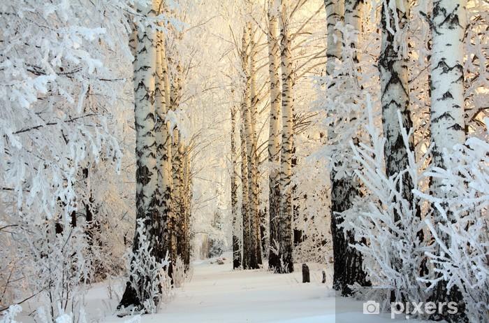 Sticker Pixerstick Bois de bouleaux en hiver dans la lumière du matin - Thèmes
