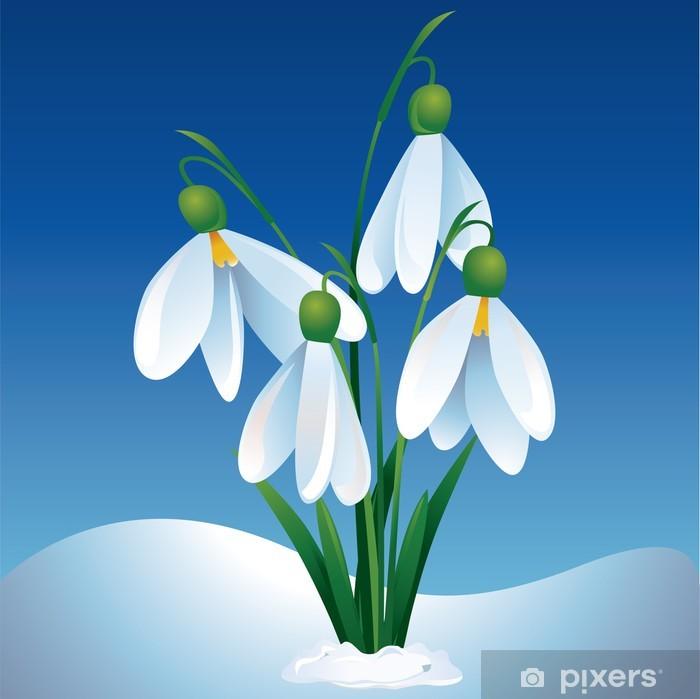 Fototapete Erste Fruhlingsblumen Schneeglockchen Pixers Wir