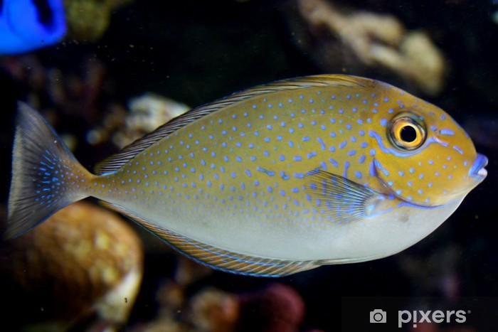 Fototapeta winylowa Pływanie ryb w morzu - Zwierzęta żyjące pod wodą